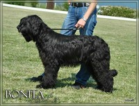 Moonlight Black Bear BONITA PEPITA