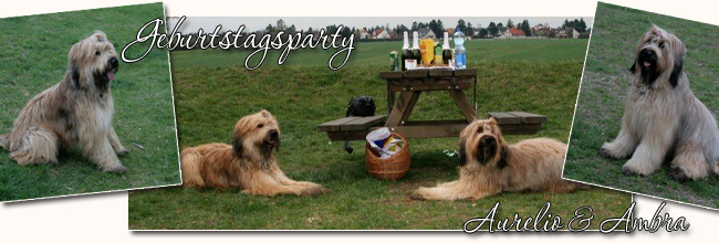 Let's party - Briard-Geburststagsparty!
