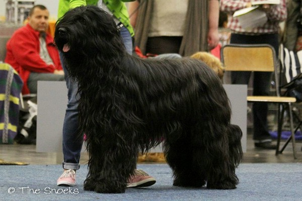 Moonlight Black Bear BLACK BARRY - Europasiegershow Dortmund 2012